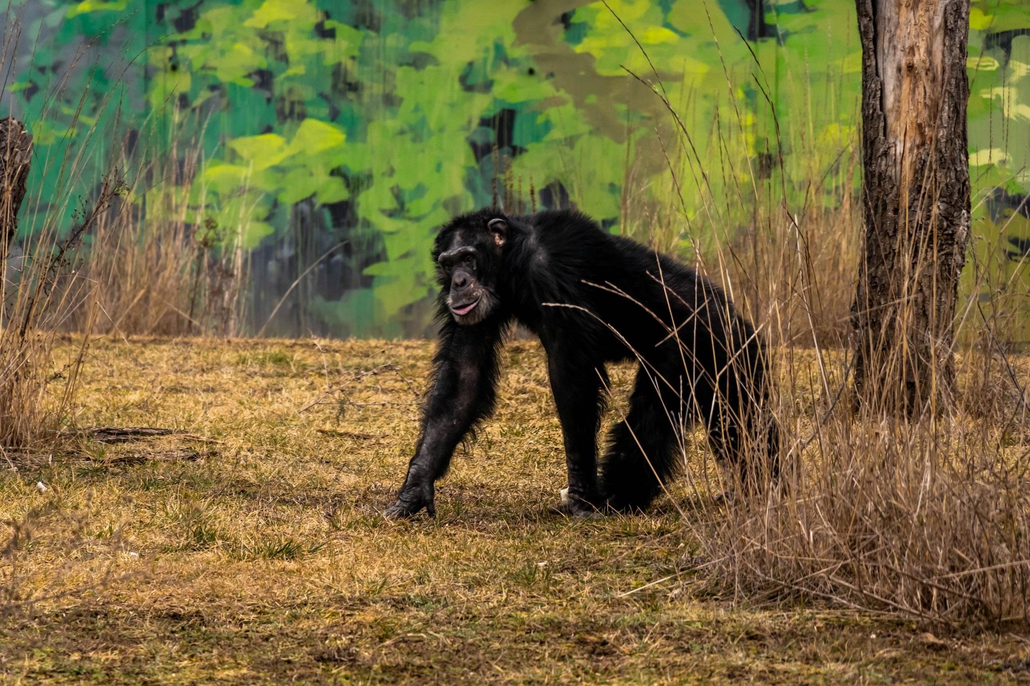 Gut Aiderbichl Affen Refugium