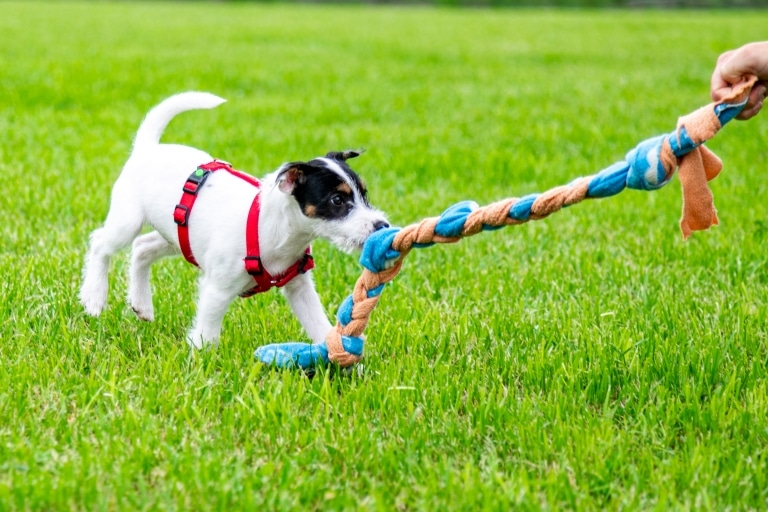 Live Webinar - Hundespiele