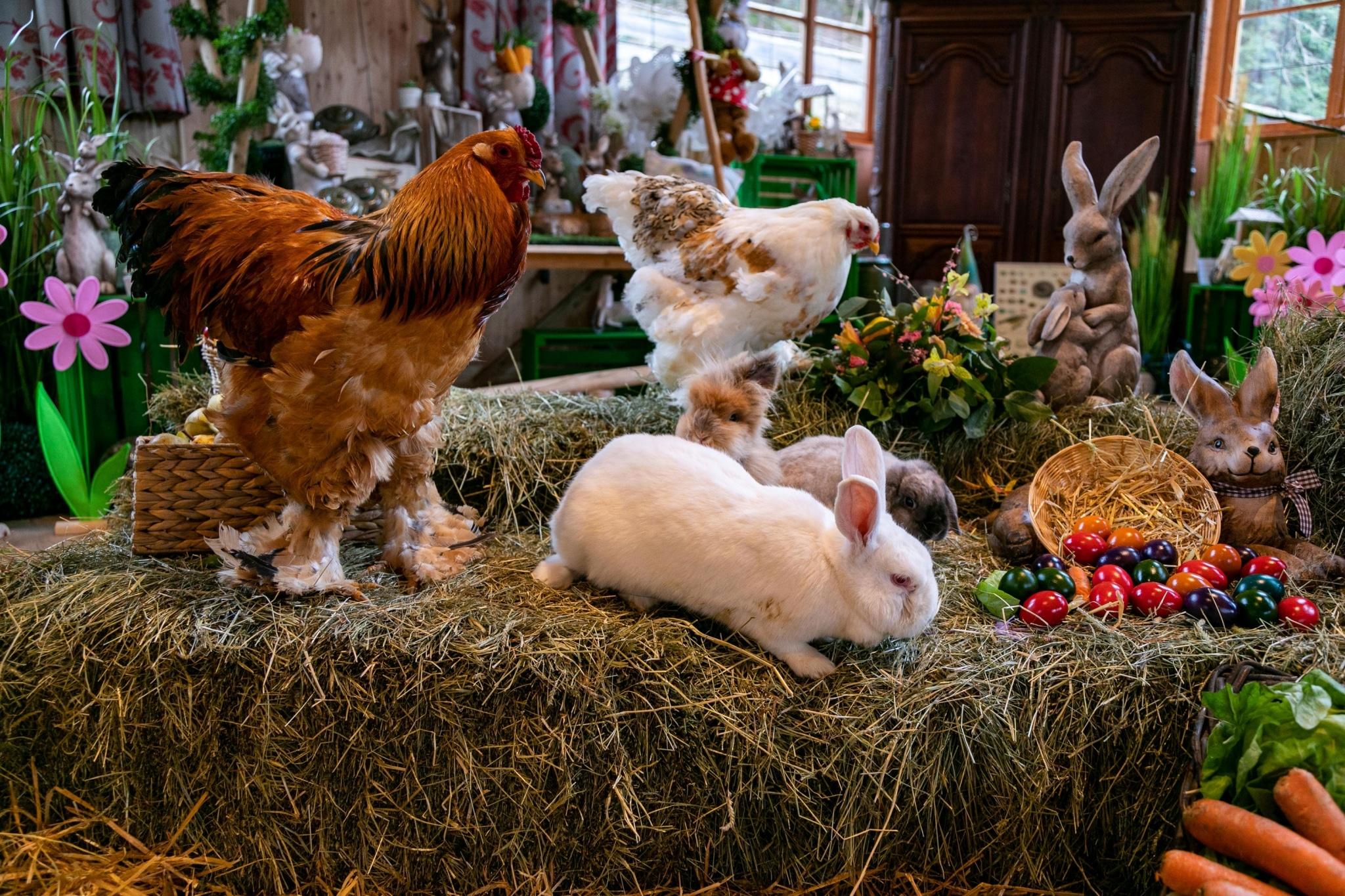 Auf unserem Ostermarkt helfen alle Tiere zusammen