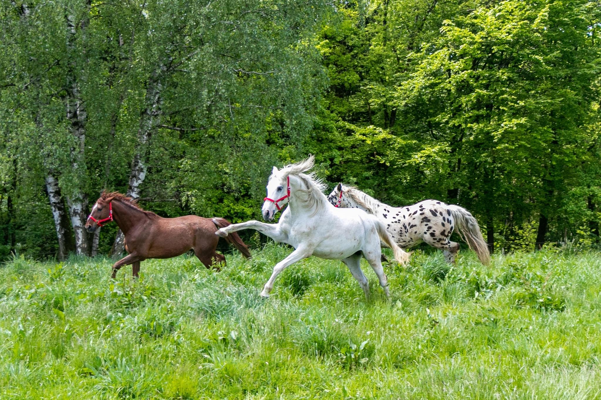 Unsere Pferde genießen den ersten Weidegang auf Gut Aiderbichl Deggendorf