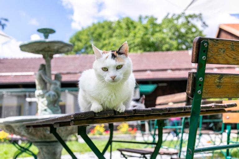 Katze auf Gut Aiderbichl Deggendorf