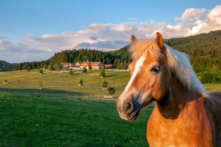 Gut Aiderbichl Henndorf aus der Ferne mit Pferd
