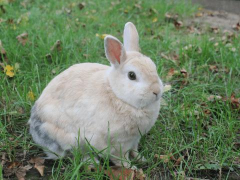 Kaninchen Barney in Deggendorf