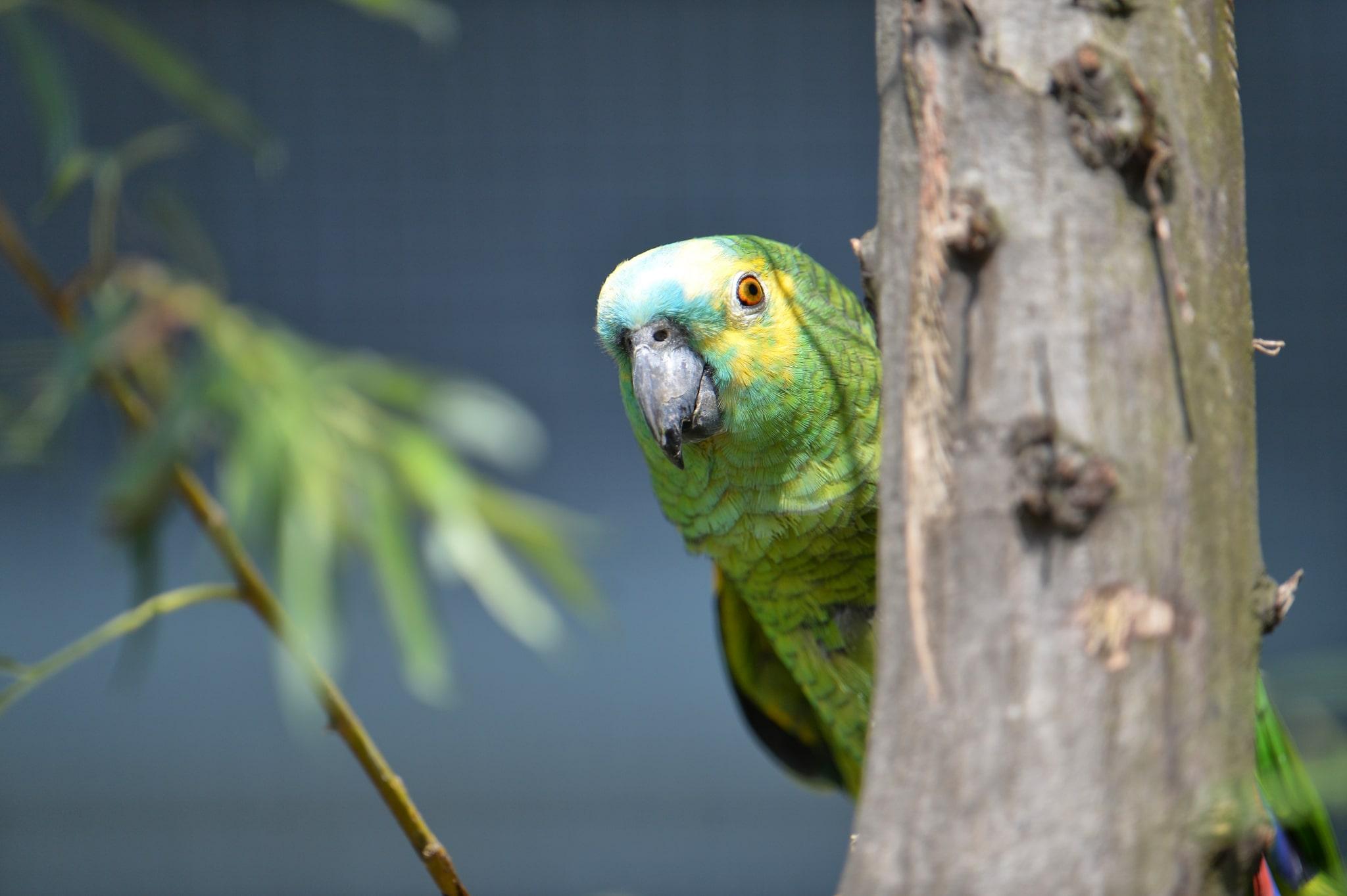 Unsere Papageien haben wunderschöne Farben