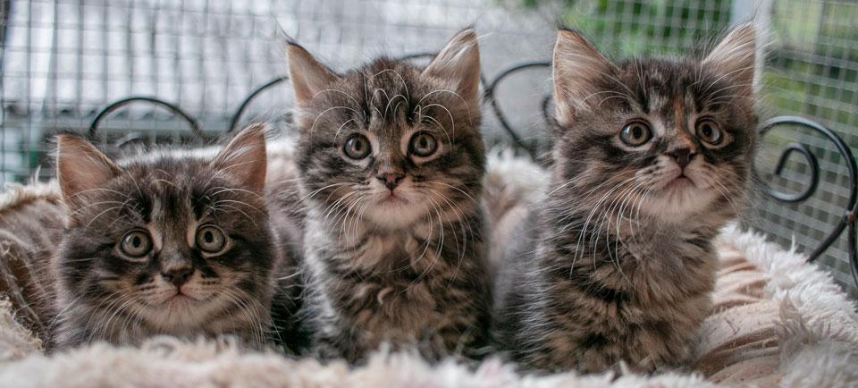 Drei kleine Babykatzen