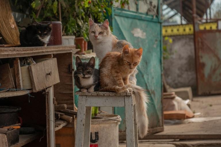 Straßenkatzen in Rumänien