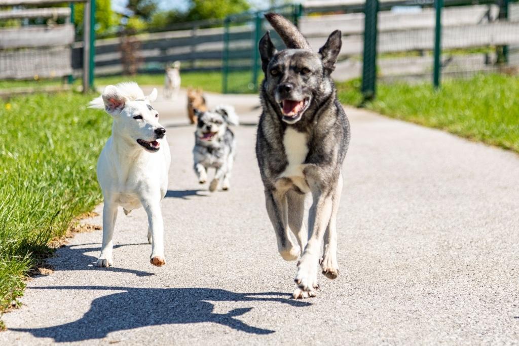 Hundegruppe auf unserem Hundepfad