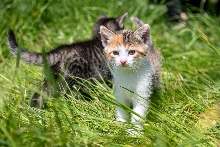 Babykatze auf der Wiese