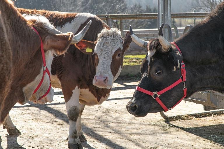 Lienie bei Ihrer ersten Zusammenkunft mit ihrer neuen Herde