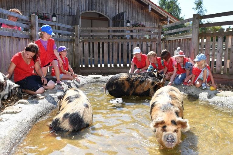 Kinderfest auf Gut Aiderbichl Henndorf: Kinder mit den Kune Kune Schweinen