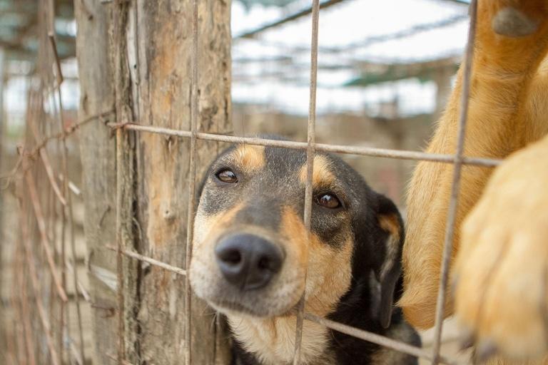 Ein Straßenhund im ehemaligen Shelter von Ioana