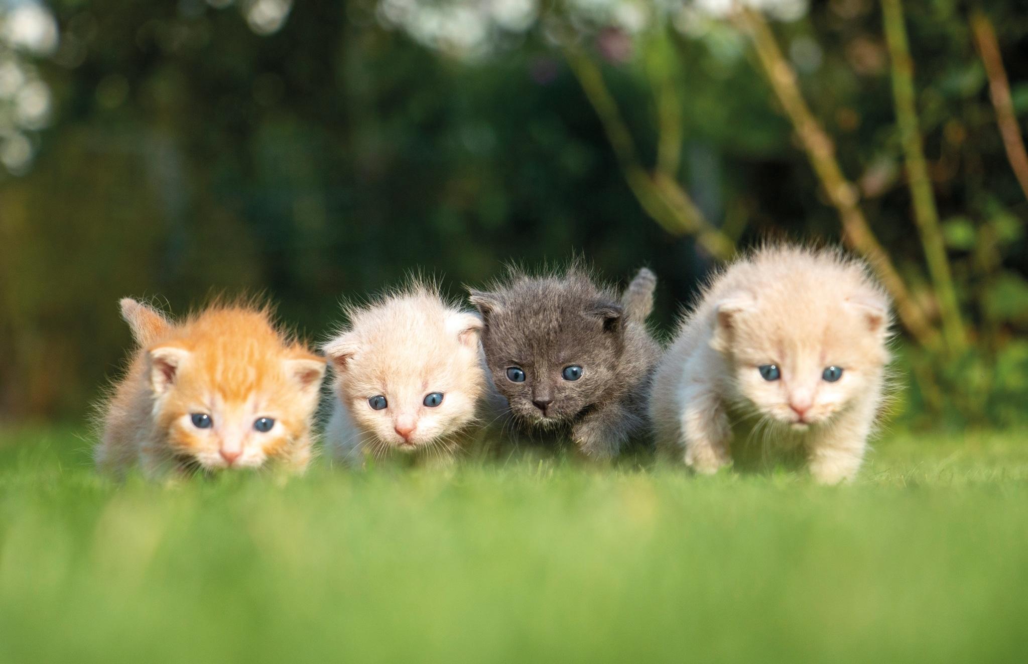 Babykatzen auf Gut Aiderbichl