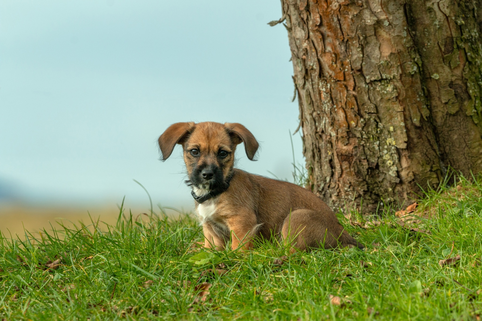 Hund Wolfgang am Schroffnergut