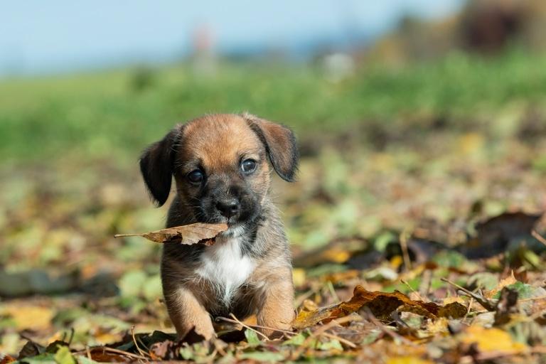 Hundewelpe Wolfgang auf unserem Schroffnergut