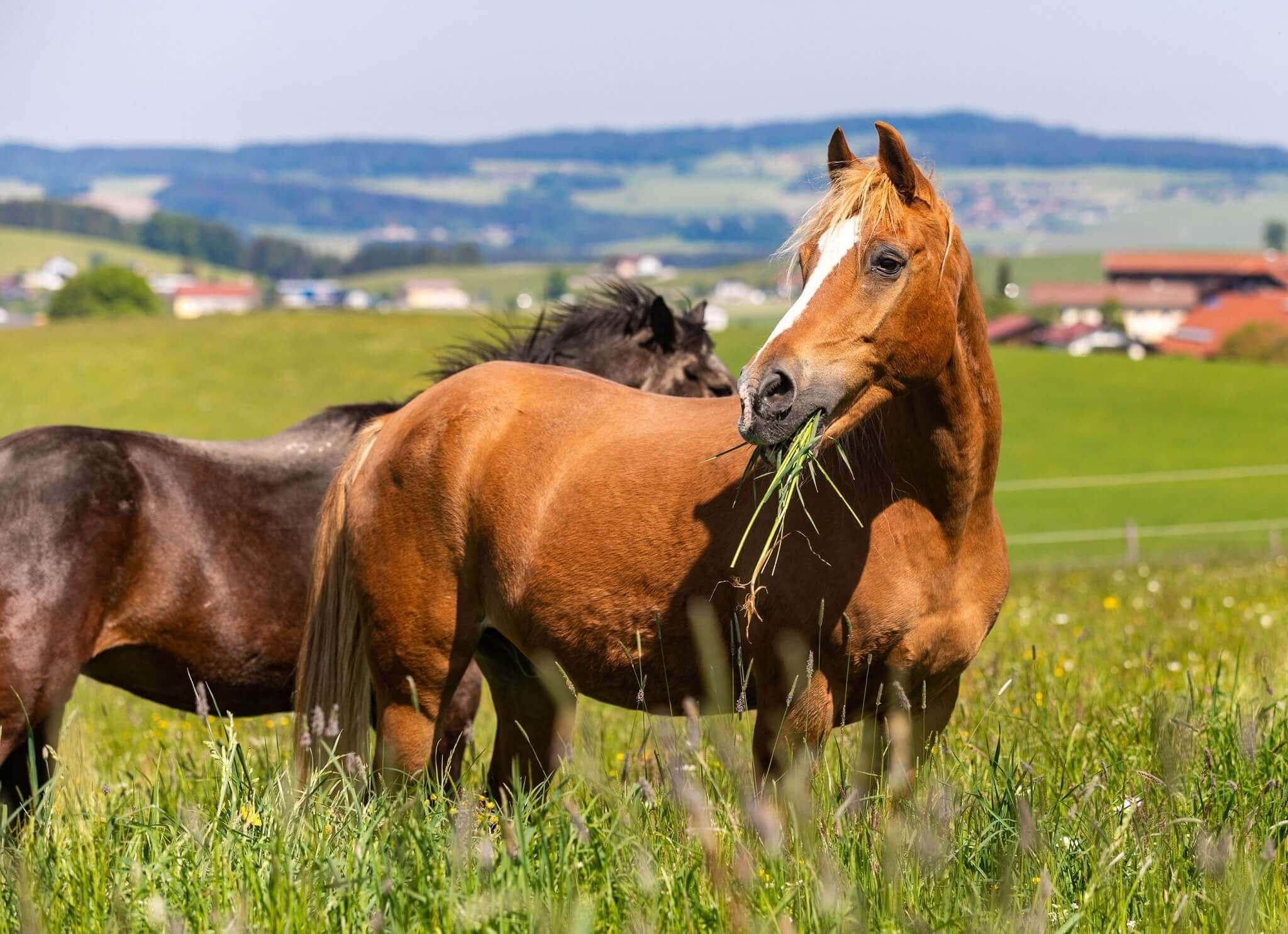 Pferde auf Gut Aiderbichl