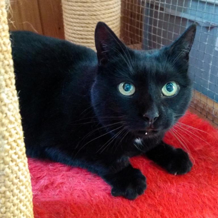 Katze Möhrli in ihrem neuen Zuhause