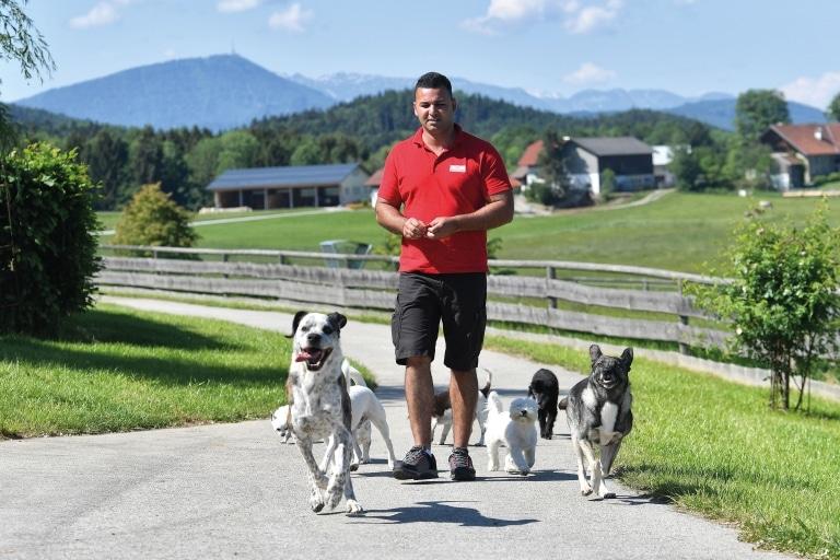 Daniel mit den Villa-Hunden
