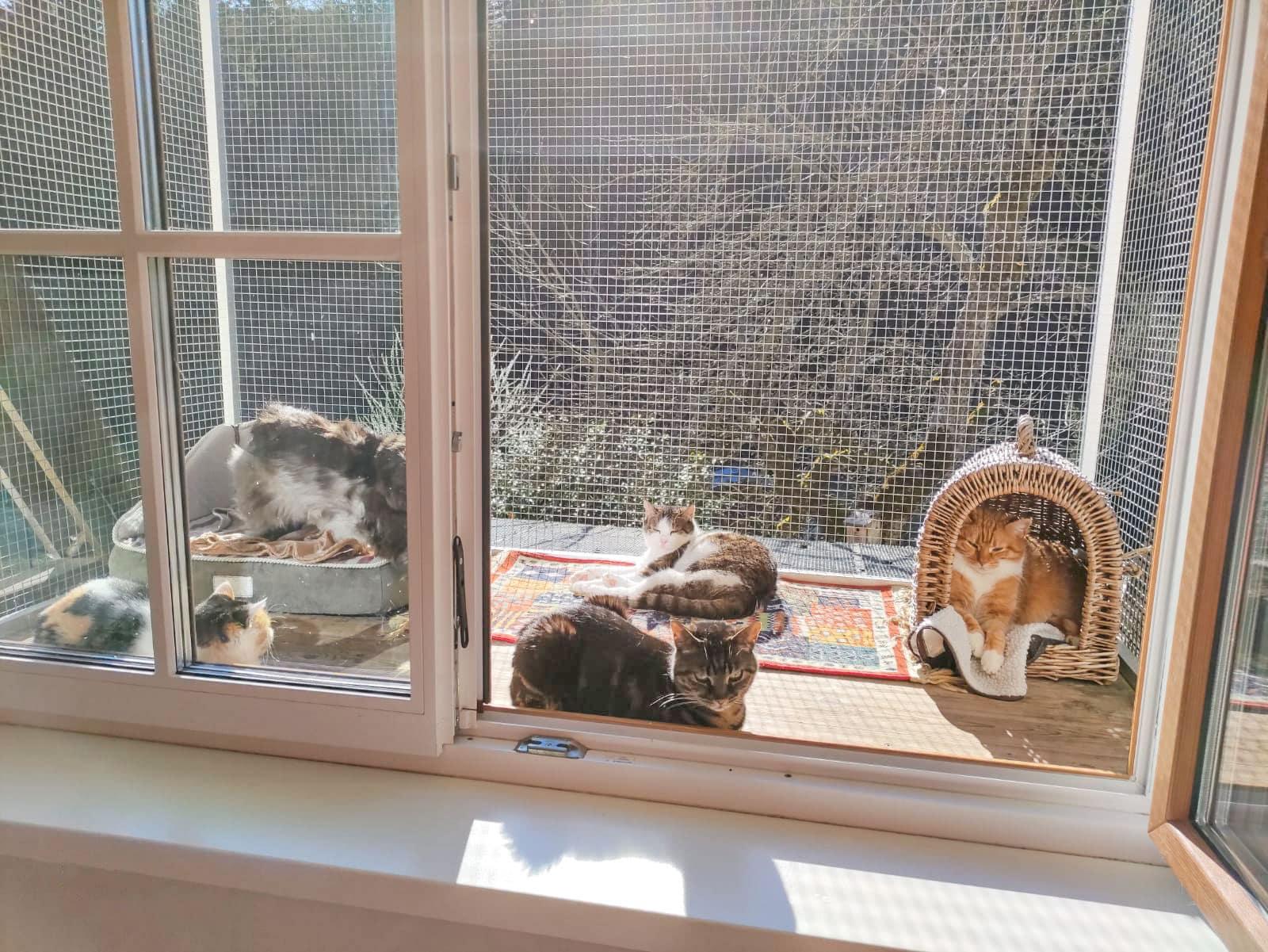Katze Psira in ihrem neuen Zuhause mir ihren neuen Freunden