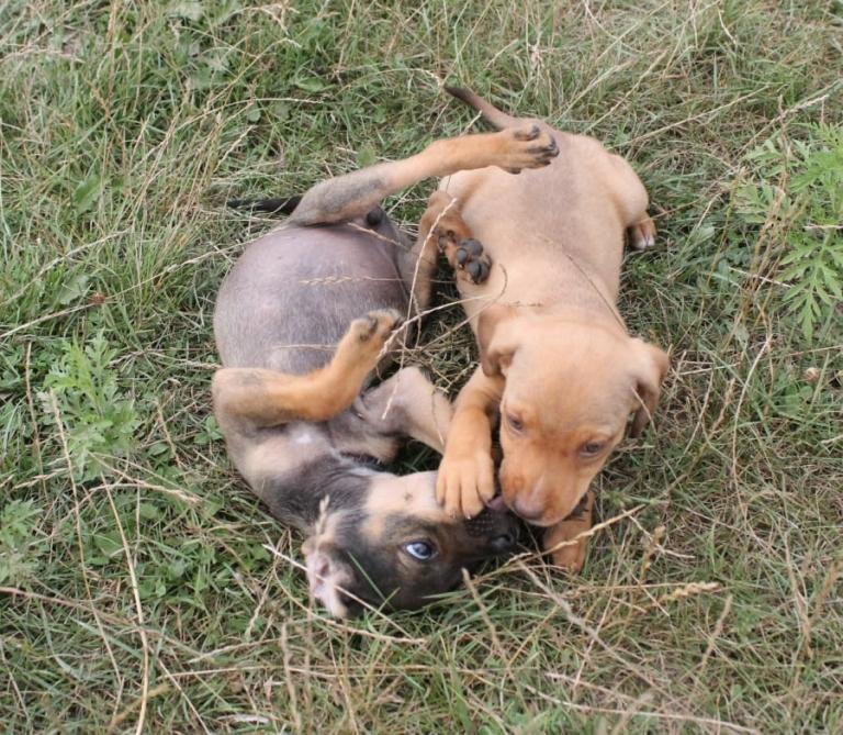 Shai und Savanna aus Rumänien