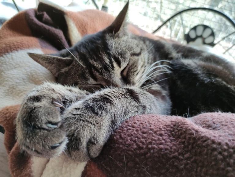 Katze Psira in ihrem neuen Zuhause