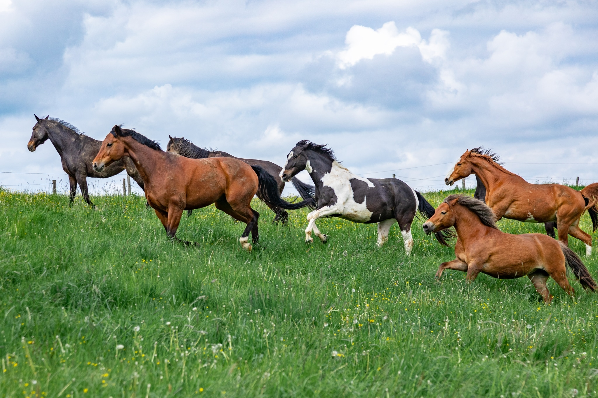 Weidegang unserer Pferde im B-Stall auf Gut Aiderbichl Henndorf