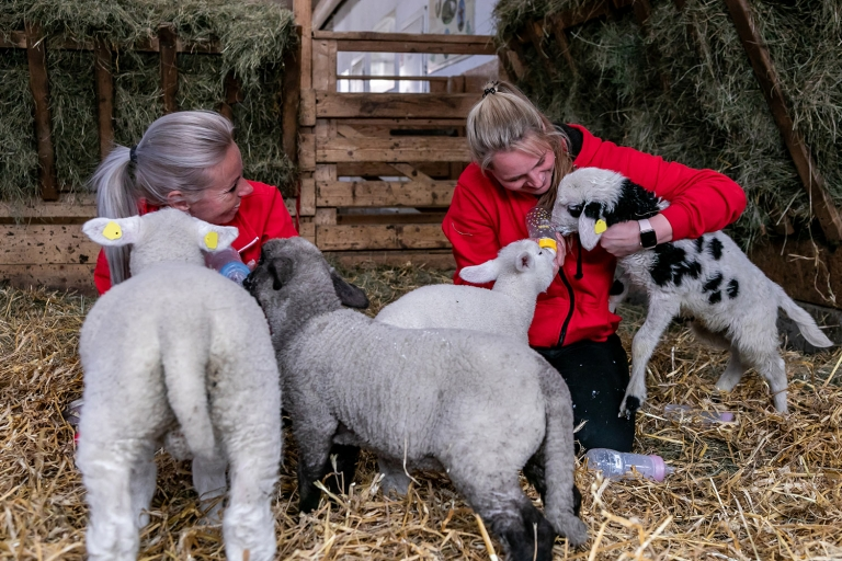 Unsere Tierpfleger kümmern sich liebevoll um unsere Osterlämmer