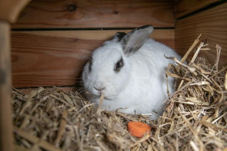 Unser Kaninchen Steirerin
