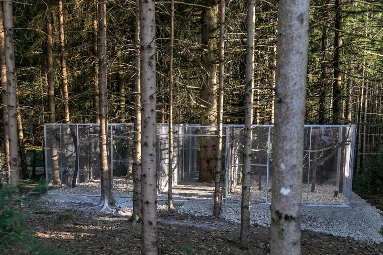 Eichhörnchen Auswilderungsstation auf Gut Aiderbichl Henndorf