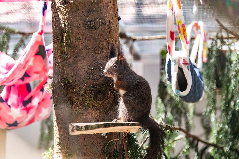 Unsere Eichhörnchen in ihrem neuen Gehege