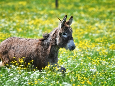 Unsere Esel haben stets sehr viel Spaß auf der Weide