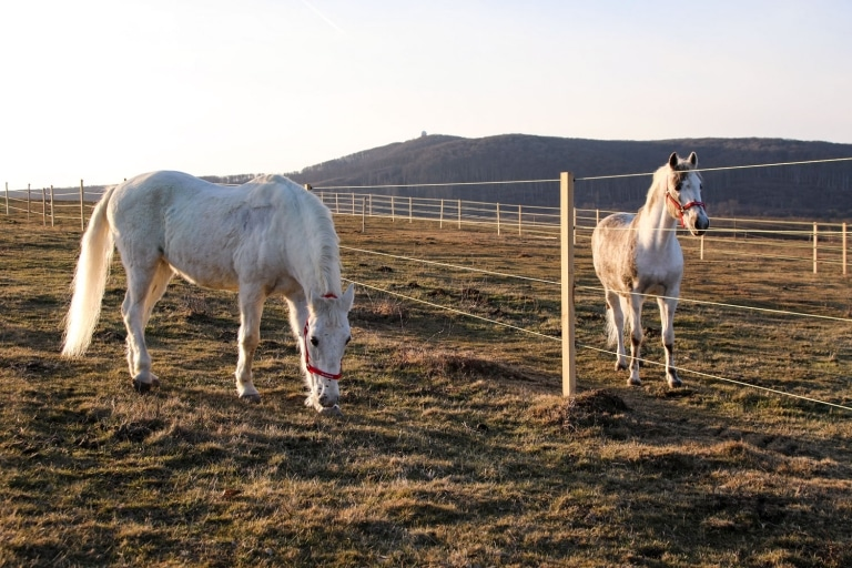 Auf Gut Aiderbichl Ungarn können die Pferde ihre wohlverdiente Pension verbringen.