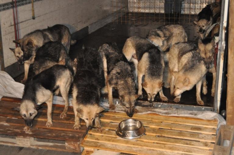 So haben wir die Hunde bei der Rettung vorgefunden