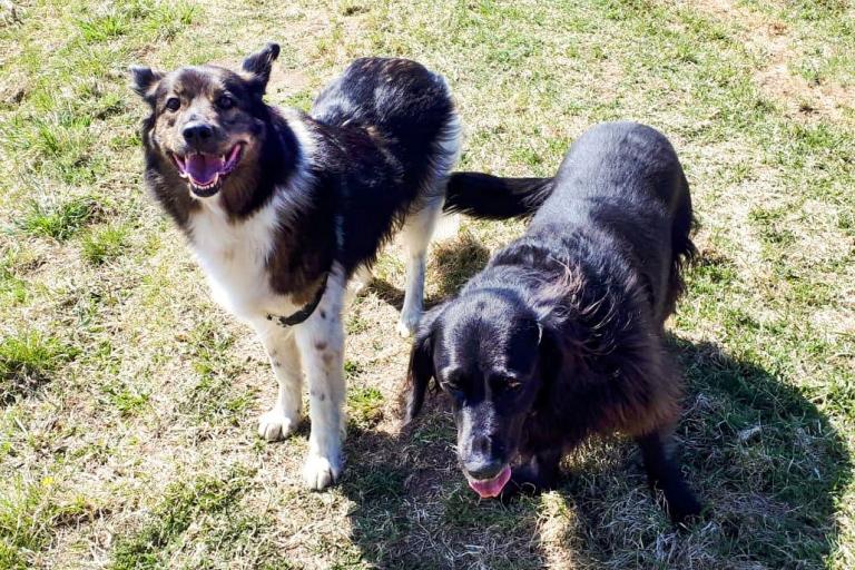 Sissi (links) mit ihrem neuen Geschwisterchen