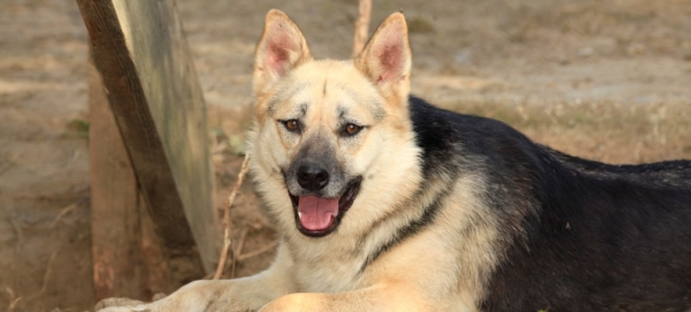 Nikita ist unser ältester Hund