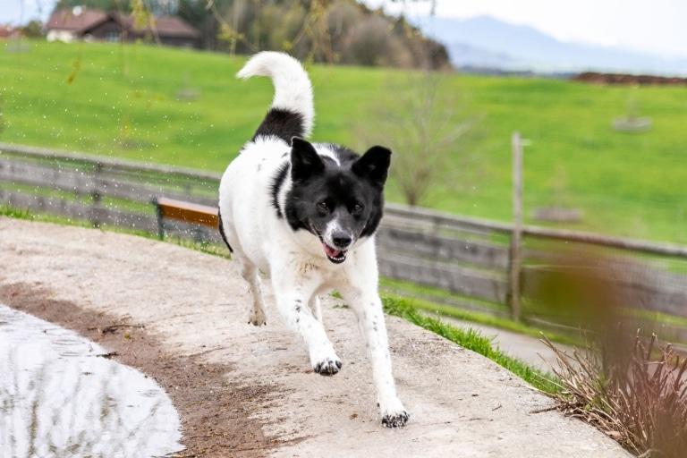 Mit voller Kraft voraus: Hund Sandy