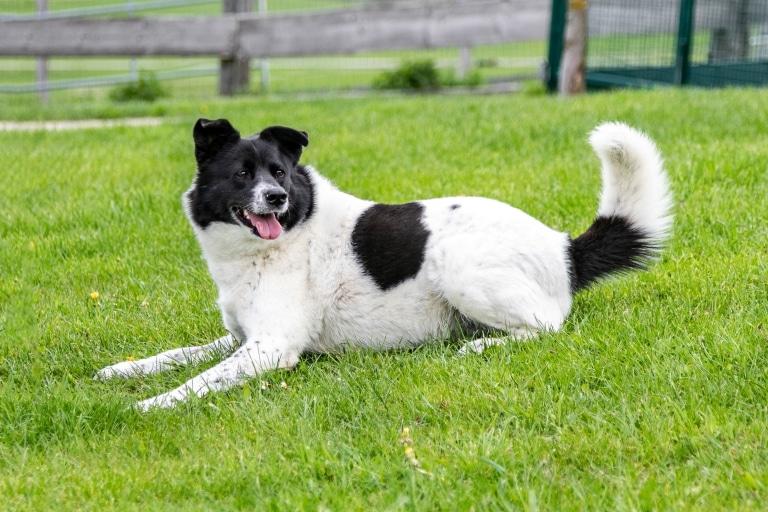 Hund Sandy auf der Hundewiese