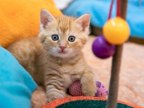 Katze Ginger schaut neugierig in die Kamera