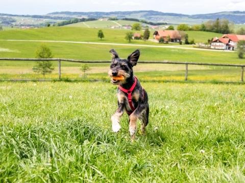 Hund Marley auf der Hundewiese
