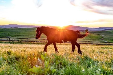 Pferd Bimbo im Sonnenuntergang