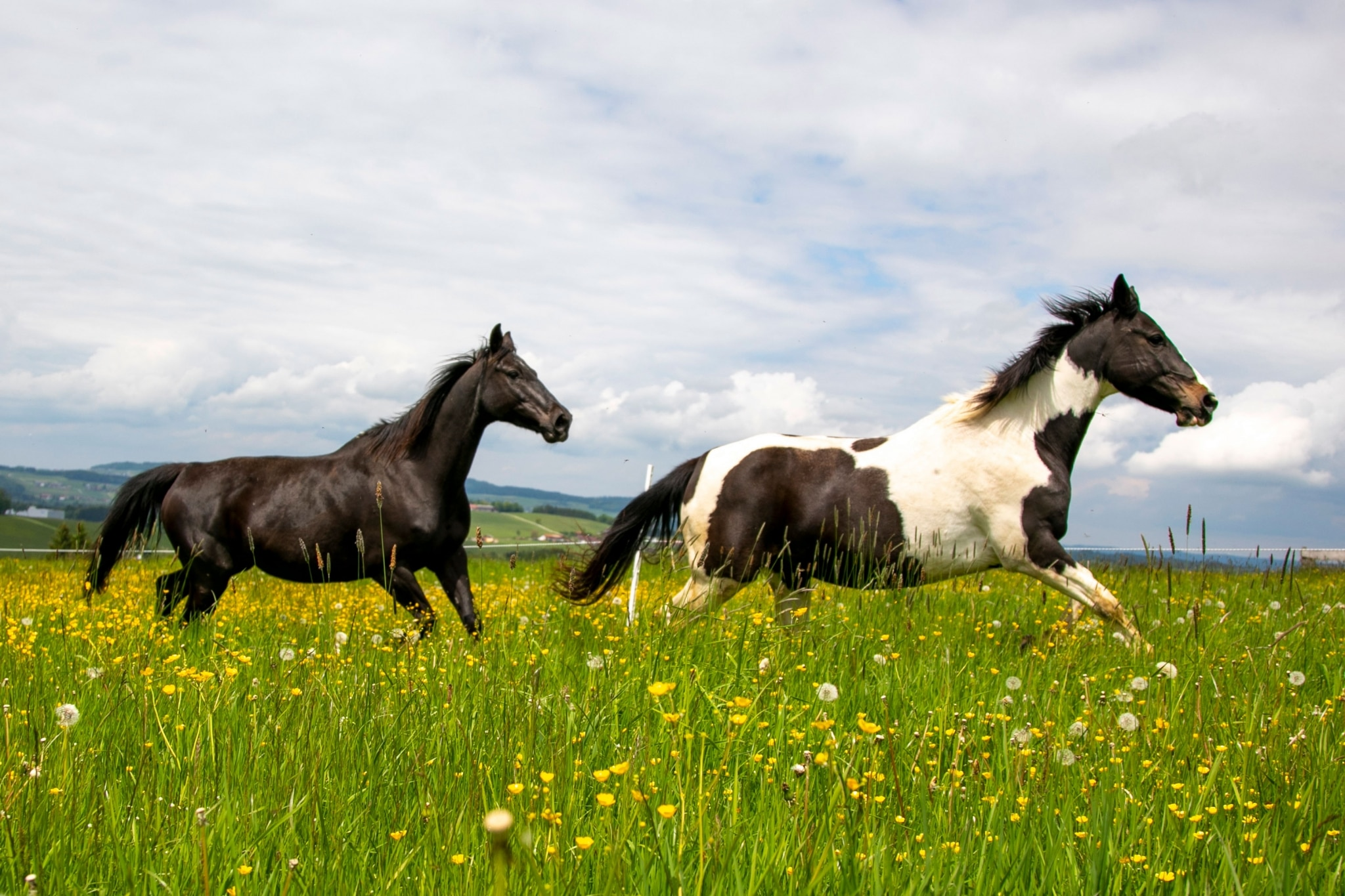 Weidegang unserer Pferde auf Gut Aiderbichl Henndorf