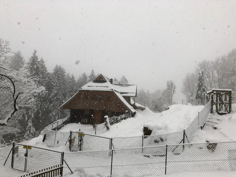 Gut Aiderbichl Kärnten versinkt aktuell im Schnee und wünscht ein schönes Jahr 2021.