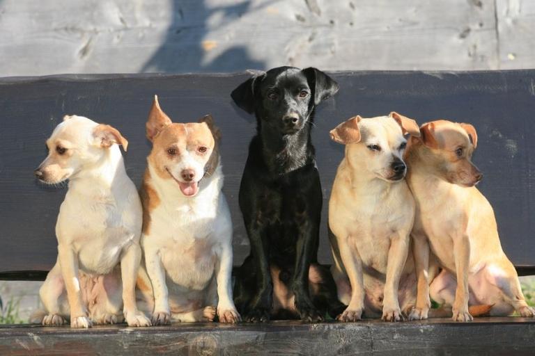 Gut Aiderbichl Hunde