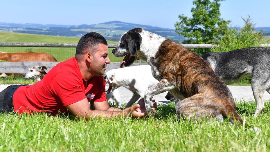 Hundepfleger Daniel auf der Hundewiese