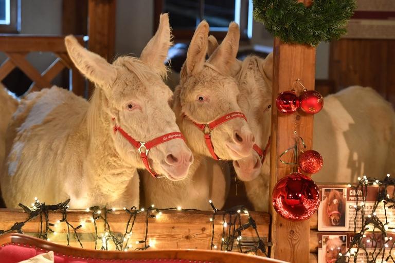 Auf unsere Esel finden den Trubel zu Weihnachten immer toll