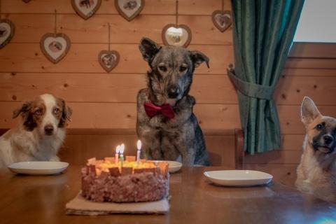 Geburtstag von Mr. Grey