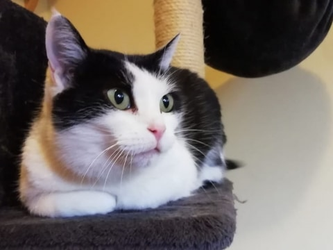 Katze Fritzi hat nun wieder ein neues Zuhause