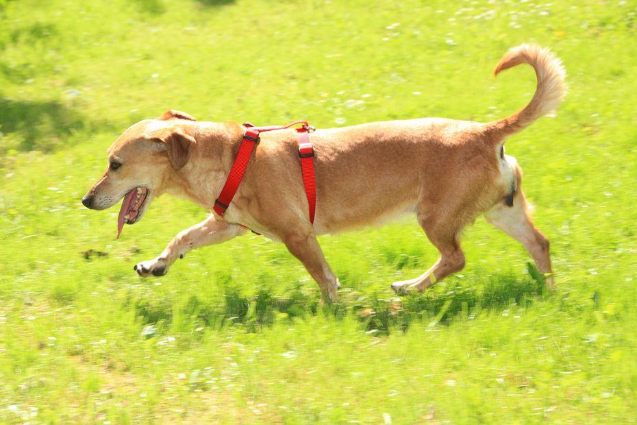 Gut Aiderbichl Akademie: Der rundum gesunde Hund