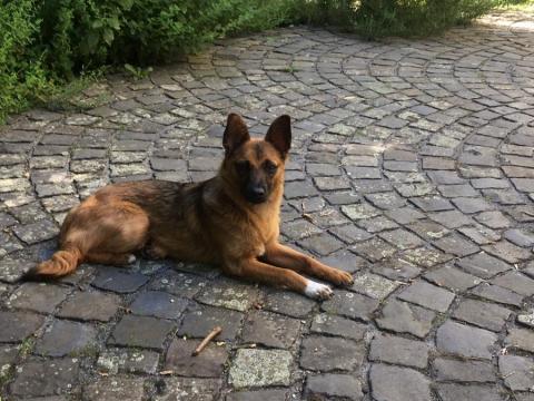 Marro konnte von den rumänischen Straßen geholt werden