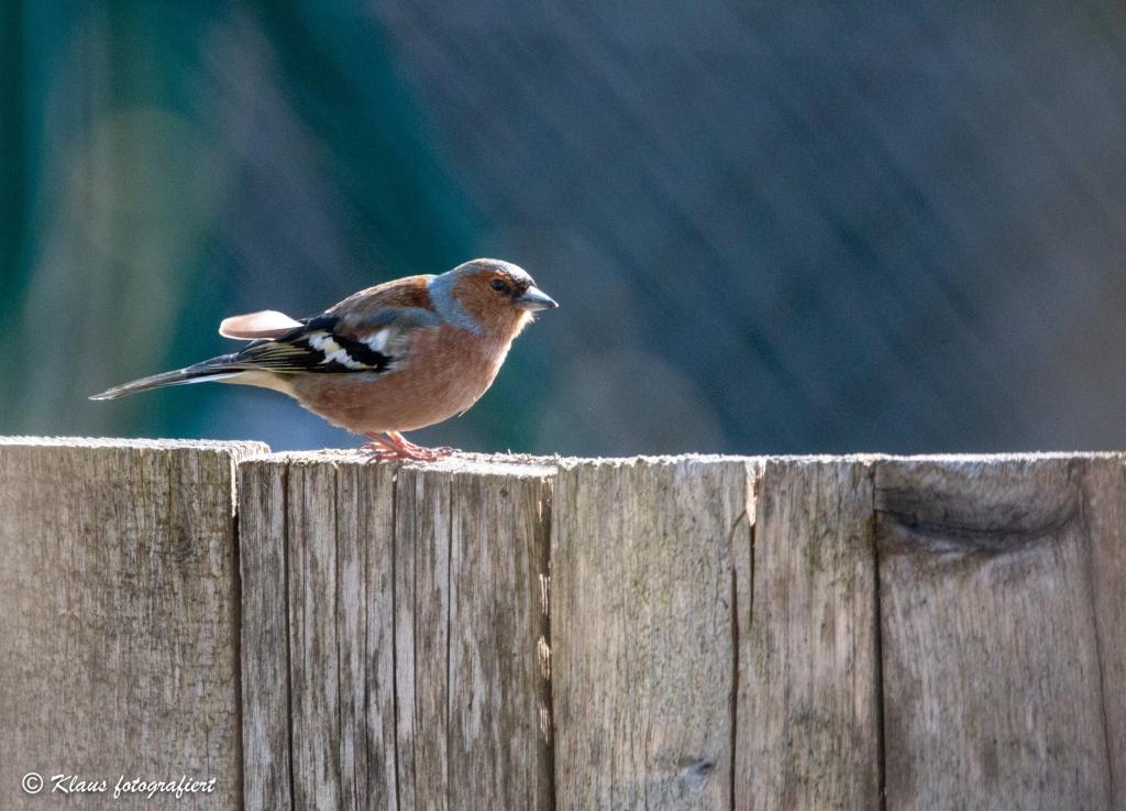 Live Webinar - Winterfütterung von Wildvögeln