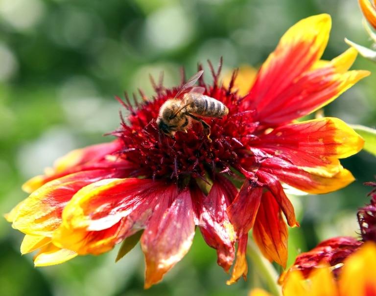 Bienen sind wunderschöne Geschöpfe